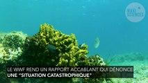 La mer Méditerranée est la plus polluée en plastique