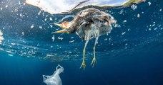 La France est championne méditerranéenne des déchets plastiques