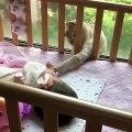 Quand un adorable chat borde un bébé, voici ce que ça donne. Mignon !