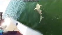 Un monstre surgit et emporte un requin sous les yeux des pecheurs
