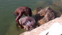 Il capture une méduse monstrueuse à Marbella - Plage de Rodelto