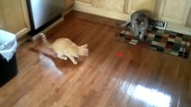 Cats VS Laser Pointers  Funny Cats Vs Laser Pointers (Full) [Epic Laughs]