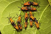 Declining Insect Numbers 'Threaten Collapse of Nature'