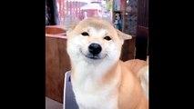 Un chien faits de grands sourires