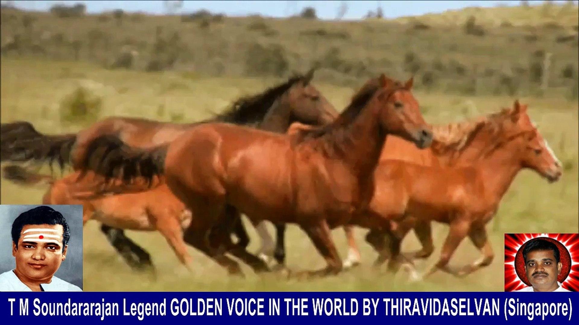 Old Is Gold (evergreen) T M Soundararajan Legend Vol 229   horse  song  2,
