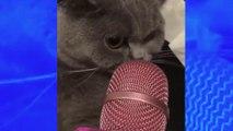 Ces vidéos de chats avec des micros font le tour du web
