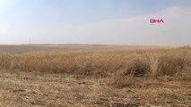 ŞANLIURFA Ceylanpınar'da tarım arazisine düşen yıldırım, 10 bin dönüm ekini kül etti - EK