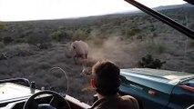 Un rhinocéros les charge alors qu'ils sont en train de l'observer
