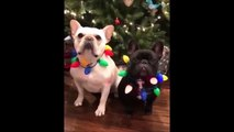 Funny Animals Compilation 2019   Best Animal Videos   Funny Animals Videos   Viral Videos