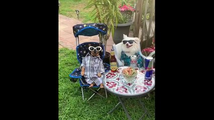 Dogs hold drinks party to enjoy hot weather in New Jersey