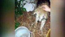 Cachorro é envenenado e morador do Bairro Neva pede ajuda