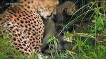 documentaire animalier LES ANIMAUX DE LA FORÊT ! -  documentaire animalie 2019