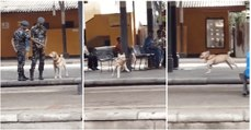 """Quando um cão """"recruta"""" pede permissão para brincar e esta é-lhe concedida"""