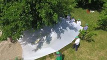 Tut'un beyaz altınında hasat zamanı...Dut hasadı havadan görüntülendi