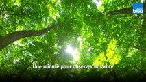 Une minute pour observer un arbre