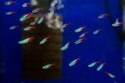 Les différents types d'aquariophilie
