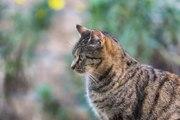 Top 10 des races de chats les plus populaires