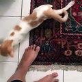 Cette mignonne chatte est d'humeur joueuse. Regardez ce qu'elle fait !