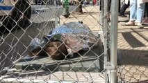 New York street art highlights child detentions at US-Mexico border