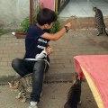 L'innocence et la gentillesse de cet enfant envers des chats sans abris va vous émouvoir. Admirez !