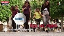 C'est au programme : Découvrez la signification des aboiements des chiens (vidéo)