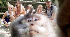 Un singe a attrapé un appareil photo et fait un selfie avec un doigt d'honneur en prime