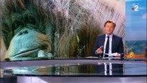 Orang-outan : Nénette, la doyenne du Jardin des plantes, fête ses 50 ans