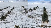 Watch: Indo-Tibetan border police perform Yoga at 18,000 feet in Ladakh   Oneindia News