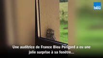 Un bébé chouette à la fenêtre d'une auditrice de France Bleu Périgord