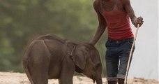 Ce photographe dénonce les pratiques d'un parc animalier en Inde, utilisant les éléphants comme attractions touristiques !