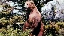 Grizzly Man Documentary movie (2005)