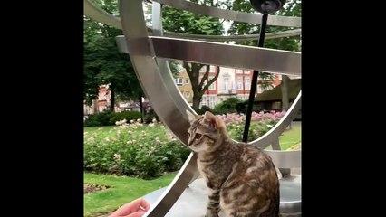 Adorable kitten goes sightseeing in London