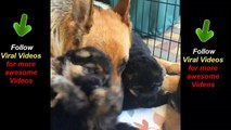 Mamma with her puppers | Dog mother with her puppies | Animal Videos - Viral Videos