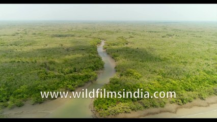 Inside Sundarban Tiger Reserve during low tide | 4 k stock footage of Datta river bank , West Bengal, India