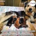 Une chienne et ses 9 chiots retrouvés dans une benne à ordures