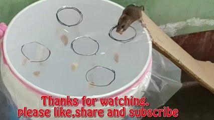 Good idea Mouse Trap  Best mouse Rat Trap  The best mouse trap I've ever seen