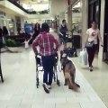Toujours là quand l'on a besoin d'eux. Ce chien en ai la preuve. Admirez !!