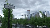 Vineyard in New York City uses rooftop for green space