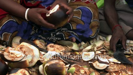 Taad or Tal Palm - Palmyra palma Fruit, Sundarbans, West Bengal, India - 4 k stock footage for local cutting Toddy palm