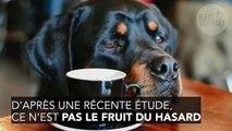 Pourquoi le regard des chiens est irrésistible ?