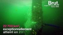 """Dans le golfe du Mexique, une immense """"zone morte"""" asphyxie la vie sous-marine"""