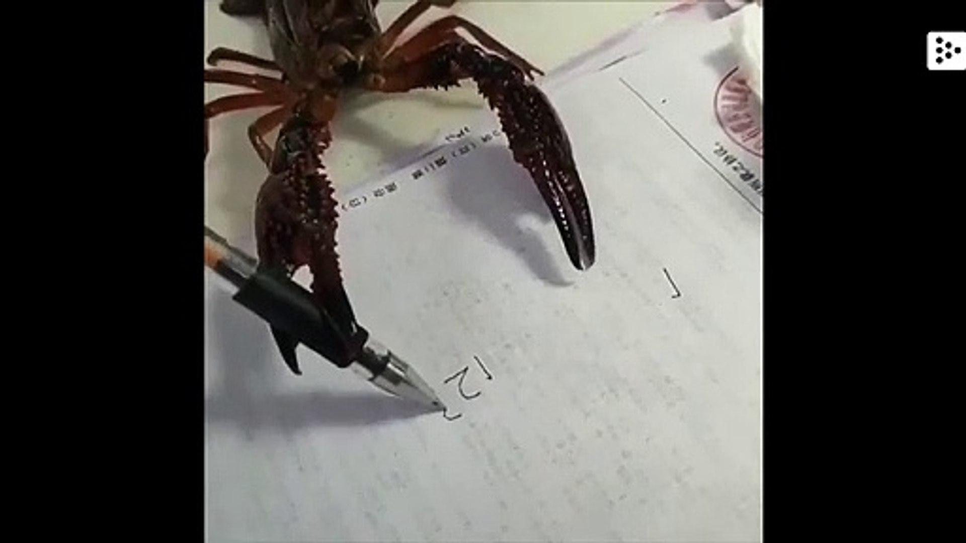 El sorprendente vídeo de un bogavante escribiendo una serie numérica