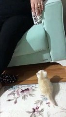 Kitten adorably fails at trying to get onto couch during pathetic jump
