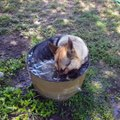 Does your dog love water! Dogs like to play with water
