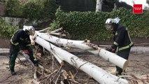 Bomberos retiran un árbol caído en Pozuelo de Alarcón (Madrid)