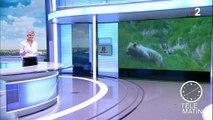 Pyrénées : un jeune enfant filme un ours sauvage