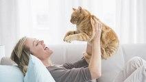¿Cómo practicar la terapia con gatos?