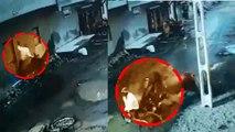 Gujarat man-animal conflict: Bull goes on rampage, injures two men near Rajkot  | Oneindia News