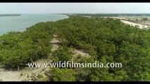 Birds eye view of UNESCO World Heritage Site , the Highly Endangered Sundarban. 4k Phantom Aerial stock footage, Bay of Bengal, India.