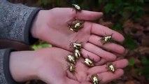 Ces scarabées dorés sont tout simplement à couper le souffle. Admirez !!